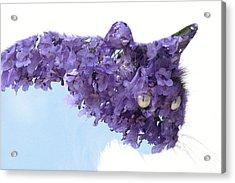 Laurel Tree In Cat Acrylic Print
