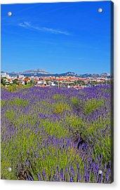 Lavendar Of Provence Acrylic Print by Corinne Rhode