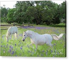 Lavender Pastures Acrylic Print