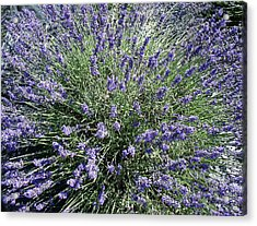 Lavender 2 Acrylic Print by Valerie Josi
