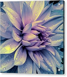 Acrylic Print featuring the photograph Lavender And Pink Dahlia And Water Drops by Julie Palencia