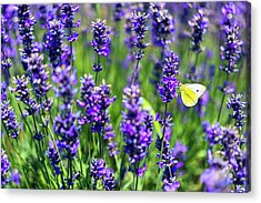 Acrylic Print featuring the photograph Lavender And The Heart by Ryan Manuel