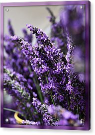 Lavender Acrylic Print by Cathie Tyler