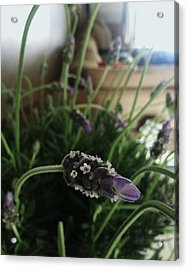 Lavender Energy Acrylic Print by Tara Miller