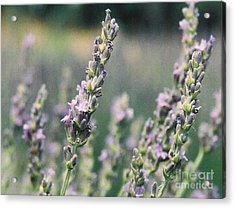 Acrylic Print featuring the painting Lavender by Eric  Schiabor