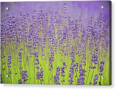 Acrylic Print featuring the photograph Lavender Fantasy by Jani Freimann