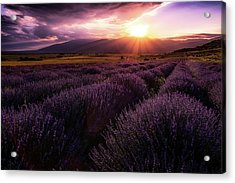 Lavender Field At Sunset Acrylic Print