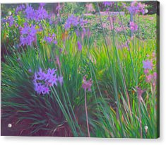 Lavender Field Acrylic Print by Maribel McIntosh
