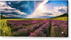 Lavender Field Panorama Acrylic Print