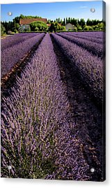 Lavender Field Provence France Acrylic Print by Dave Mills