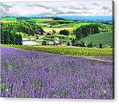 Acrylic Print featuring the photograph Lavender Fields by Kathy Tarochione