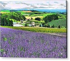 Lavender Fields Acrylic Print by Kathy Tarochione