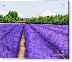 Lavender Fields Acrylic Print by Sarah Batalka