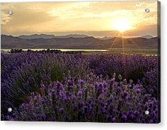 Lavender Glow Acrylic Print