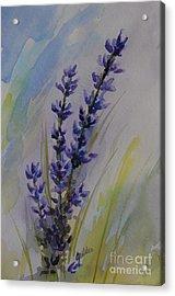 Lavender Acrylic Print by Gretchen Bjornson