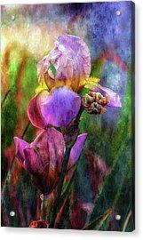 Lavender Iris Impression 0056 Idp_2 Acrylic Print