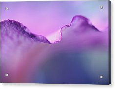 Lavender Lace Acrylic Print