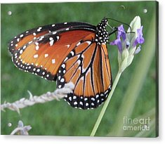Lavender Lunch Acrylic Print