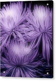 Lavender Mums Acrylic Print by Tom Mc Nemar
