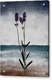 Lavender Ocean Breath Acrylic Print
