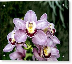 Lavender Orchid Acrylic Print