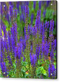 Acrylic Print featuring the digital art Lavender Patch by Chris Flees