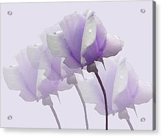 Lavender Roses  Acrylic Print by Rosalie Scanlon