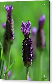 Lavender Spike Acrylic Print