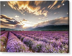 Lavender Sun Acrylic Print