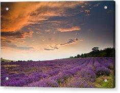Lavender Sunset Acrylic Print