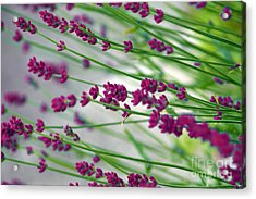 Acrylic Print featuring the photograph Lavender by Susanne Van Hulst