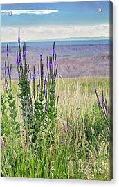 Lavender Verbena And Hills Acrylic Print