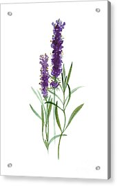 Lavender Watercolor Posters  Acrylic Print
