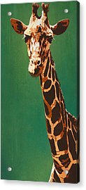 Lavish Lashes And Long Larynx Acrylic Print by Tai Taeoalii
