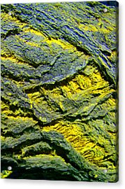 Acrylic Print featuring the photograph Layers In Blue And Yellow by Lenore Senior