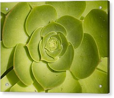 Acrylic Print featuring the photograph Layers by Nathan Rupert
