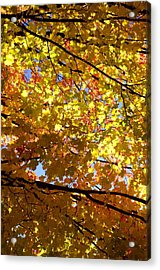 Acrylic Print featuring the photograph Layers Of Autumn by Corinne Rhode