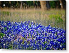 Acrylic Print featuring the photograph Layers Of Blue by Linda Unger