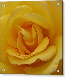 Layers Of Petals Acrylic Print by Kathy Roncarati