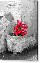 Layfayette No One Red Roses Acrylic Print by Heather S Huston