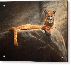 Laying Cougar Acrylic Print