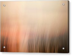 Acrylic Print featuring the photograph Laying Low At Sunrise by Marilyn Hunt