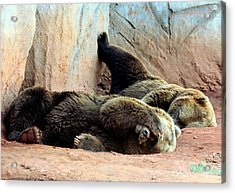 Acrylic Print featuring the photograph Lazy Bears by Sheila Brown