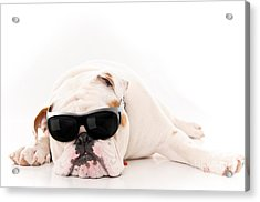 Lazy But Cool Dog Acrylic Print