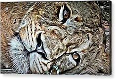Lazy Lion Acrylic Print