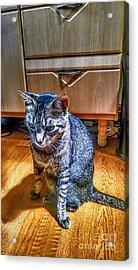 Le Chat Gris Acrylic Print