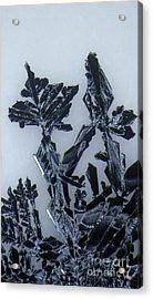 Lead Crystal Acrylic Print