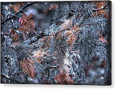 Acrylic Print featuring the photograph Ceader by Michaela Preston