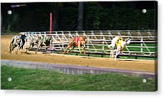 Leader Of The Pack Acrylic Print by Keith Armstrong