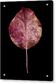 Leaf 20 Acrylic Print